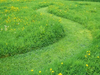 1000 images about un mown grass on pinterest gardens for Wild grass gardens