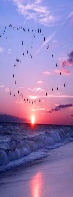 Sanibel | Beaches & Breaks | Pinterest | Sunset, Sanibel island and Beach