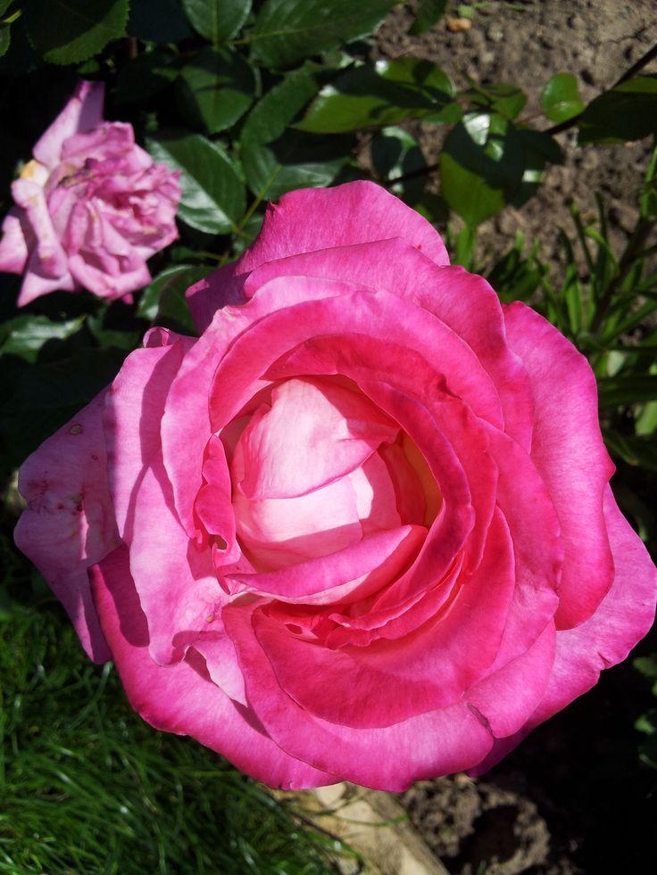 Florystyka to Twoja pasja? Sprawdź aplikację Florysta3D