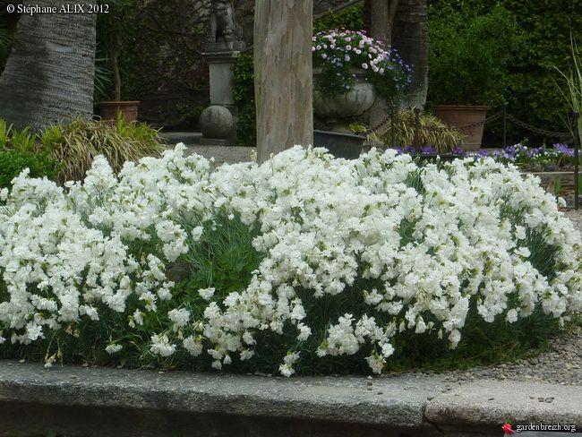 14cea343fe48591cfe29c29f65b085a8 white flowers perennials