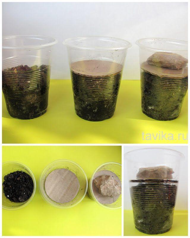 eksperymenty z roślin (kiełkowanie przez asfalt itp.)