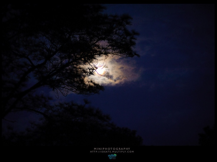 Moon in the dark forest at   Phu hin rong kla national park thailand.