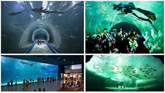 #Aqua #Planet Yeosu – Um #passeio inesquecível