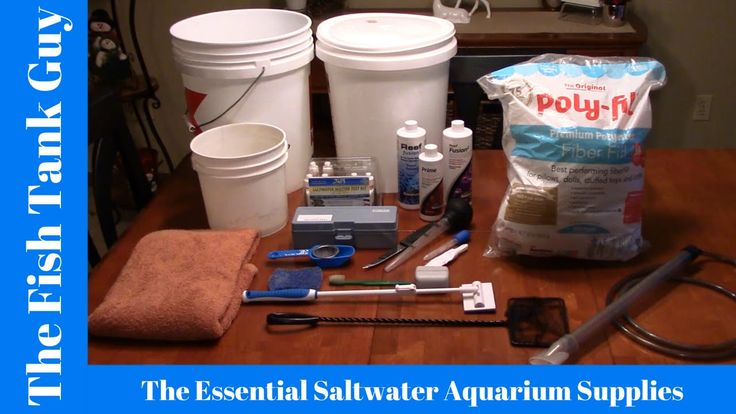 The Essential Saltwater Aquarium Supplies
