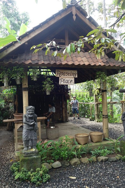 Kopi luwak farm in Ubud in 2019 Bali honeymoon, Ubud, Coffee