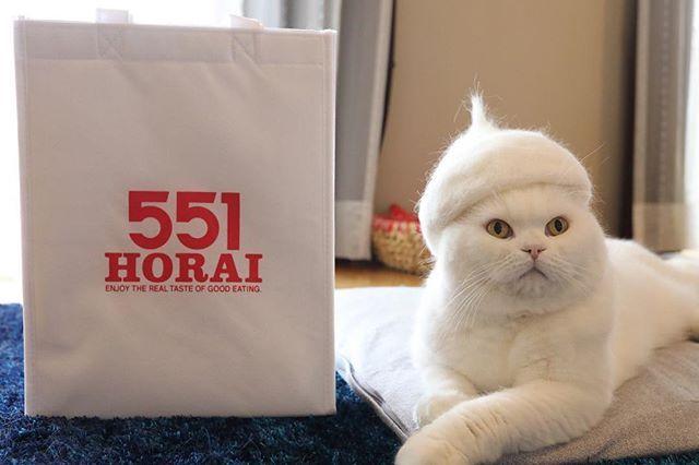 大阪土産と言えばこれ折角なので #抜け毛サロン のラインナップとコラボ♨️ #551蓬莱 #土産 #コラボ #肉まん #大阪名物 #抜け毛貯金 #換毛期  Bum cat collaborated with 551 Horai✨ #cat #scottishfold #neko #whitecat #catstagram #catsofinstagram #catlover #instacat #gato #chat #猫 #ねこ #ネコ #ふわもこ部 #もふもふ #白猫 #しろねこ #スコティッシュフォールド #白いすこちゃん同盟 #チームしろねこ
