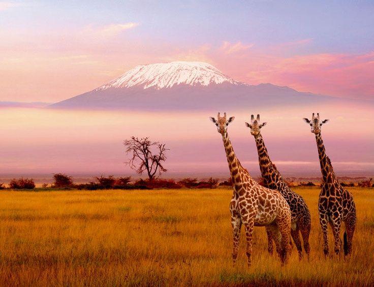 20 Photos de l'Afrique à Couper le Souffle | VoyagerLoin.com