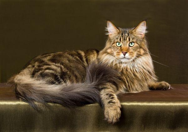 Troska o zdrowie kota:  http://www.obcasy.pl/troska_o_zdrowie_kota.html