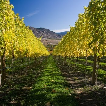 BC wine country. There are over 100 wineries here, making the Okanagan Valley the main wine region on the west coast of Canada
