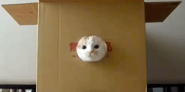 Nyse Cat Funny Giff #34610 - Funny Cat Giffs|Funny Giffs|Cat Giffs