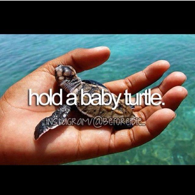 Een baby schildpad vast houden