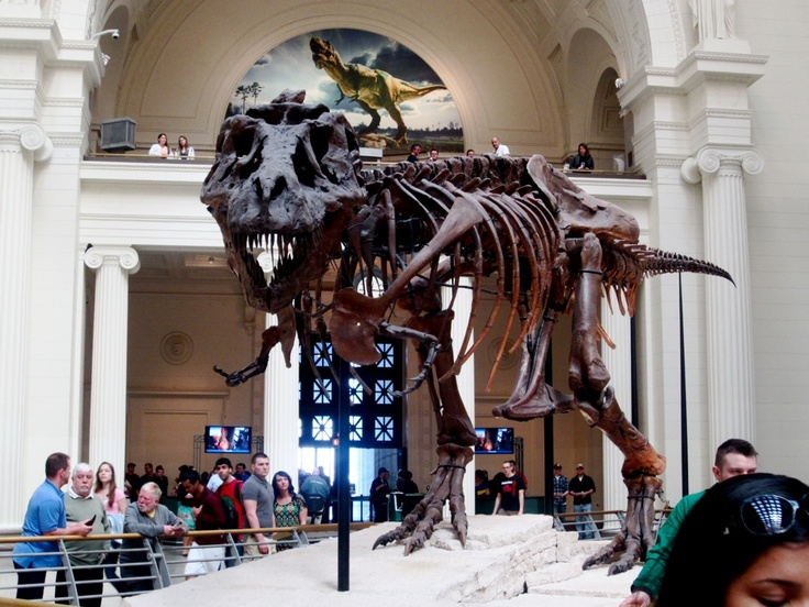 Chicago Museum's SUE  Natural History Museum