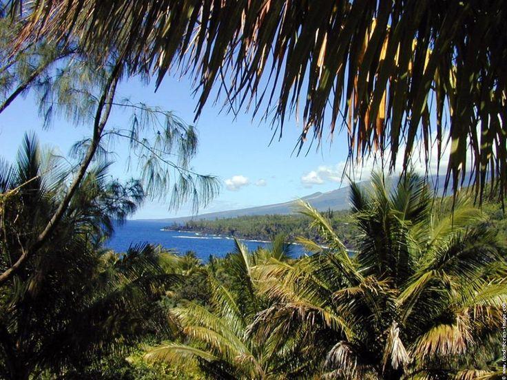sea palm sun