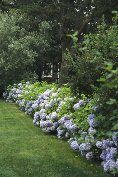 533 Best Landscape Images On Pinterest Backyard Ideas