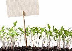 5 способов придержать рассаду в росте | Дачный участок