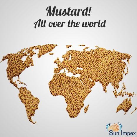 We deliver MUSTARD SEEDS all over the world.  Adding a flavourful spice to foods, mustard seeds range from being yellowish white to black. Mustard seed are extracted from the mustard plant, which is part of the cruciferous family. Black mustard, white mustard and brown mustard are the three major varieties of mustard that are consumed worldwide out of the forty different varieties of mustard.  Visit : http://bit.ly/Mustard_Spice  #SunImpex #MustardSeed #Spice #IndianSpice #YellowMustard