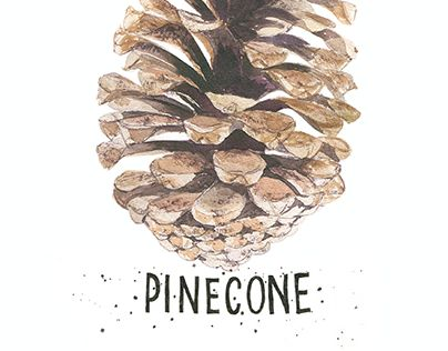 "Check out new work on my @Behance portfolio: ""Pinecone"" http://be.net/gallery/37098089/Pinecone"