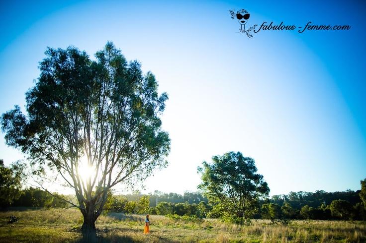 Kangaroos in melbourne