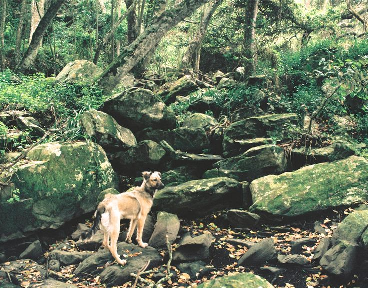 18 Day A pet-friendly road trip through South Africa   Can be done: http://ctwn.info/1JexHpX?utm_content=buffer38c4f&utm_medium=social&utm_source=pinterest.com&utm_campaign=buffer  Rheenendal and Goukamma Nature Reserve  The Knysna Heads are a vista worth capturing on your way out.  Tsitsikamma National Park  Great Kei River  Ngqeleni Village in Transkei  Hogsback  Camdeboo Conservancy  Prince Albert and the Swartberg Pass   Read it all here…