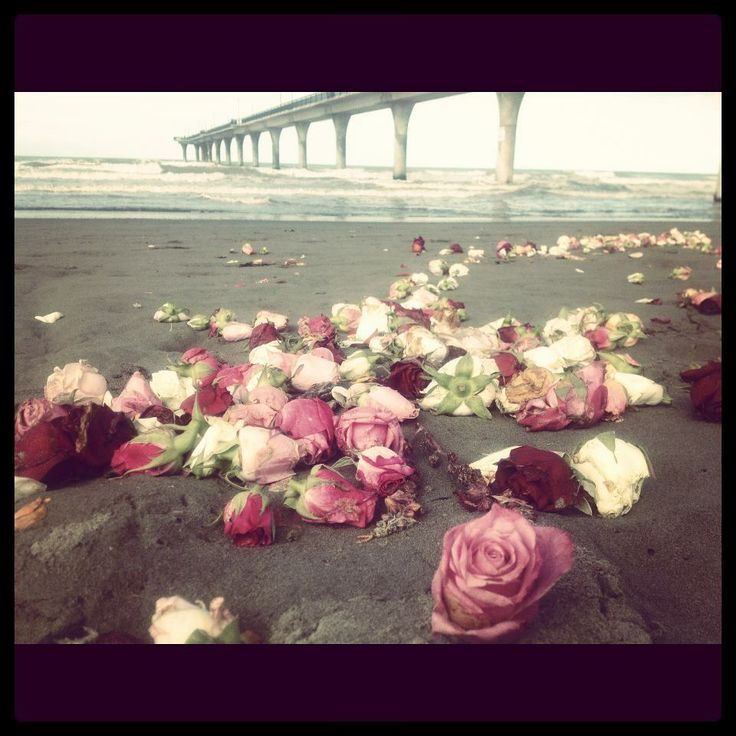 Commemorative roses droped in the Avon river, washed up on New Brighton Beach, Feb 23 2012 - Christchurch, NZ