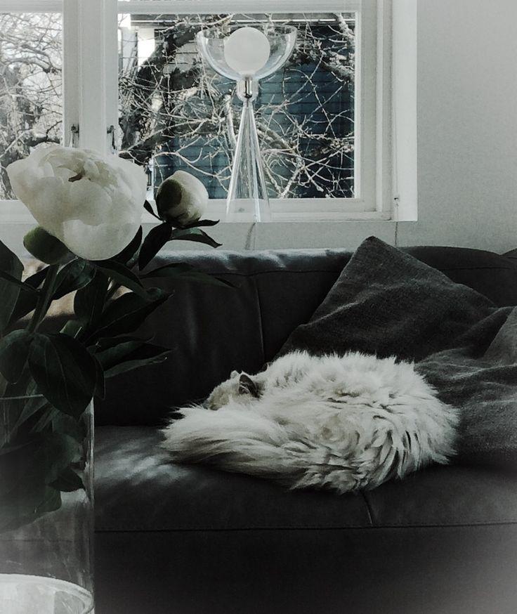 designsalong.com