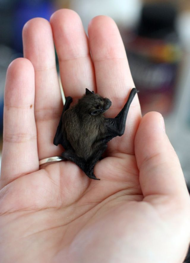 25 Of The World's Tiniest Animals