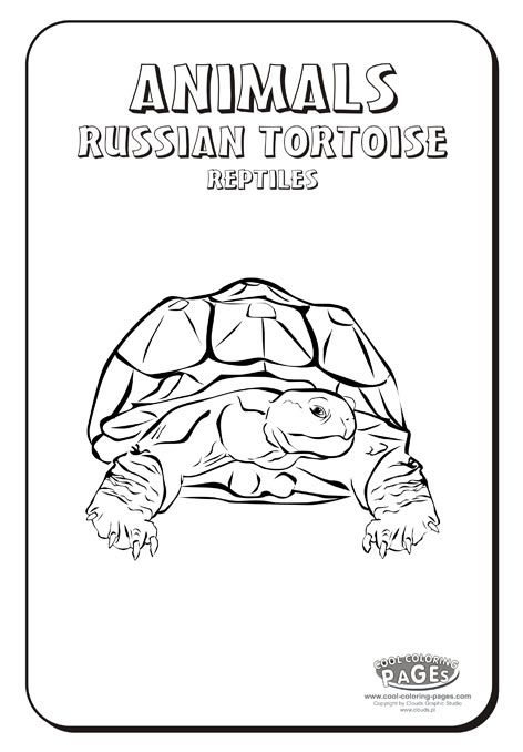 russian tortoise coloring pagesjpg 472678