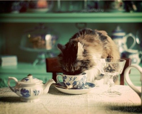 pretty kitty in the kitchen