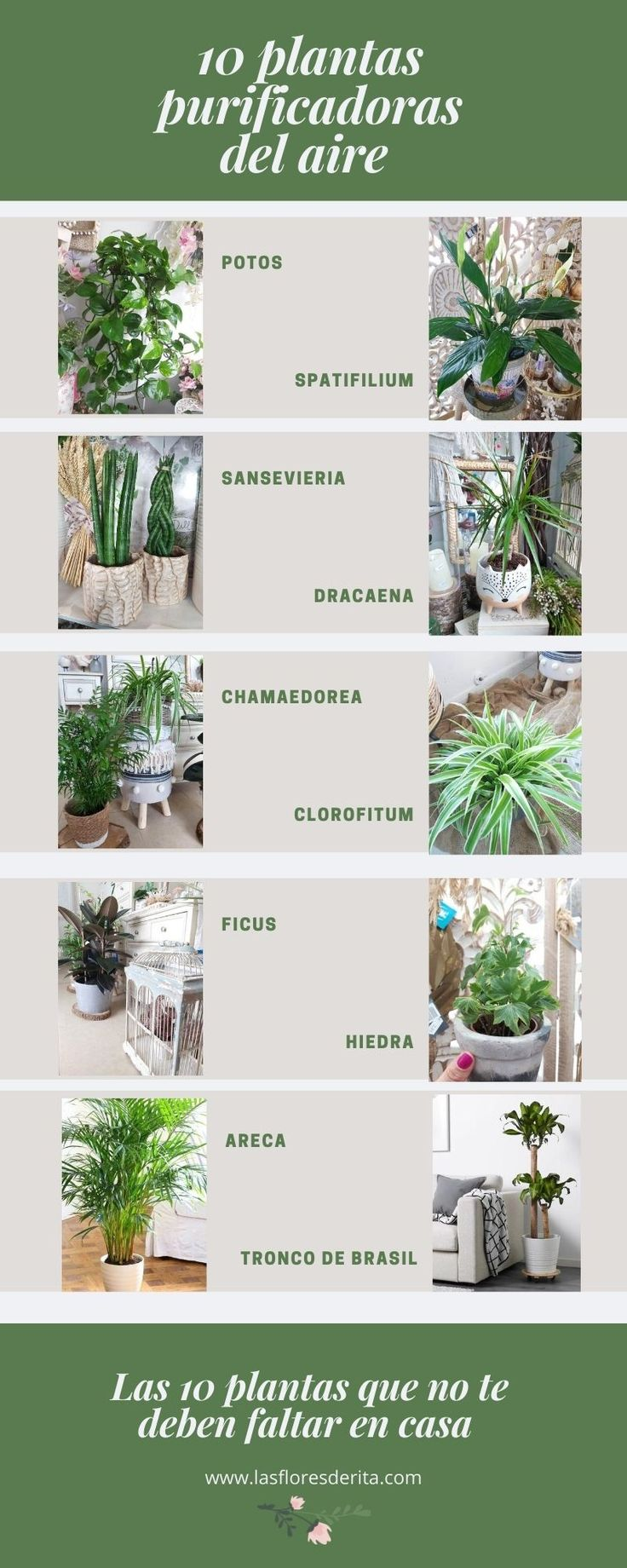 House Rooms, Compost, Home Projects, Terrarium, Planting Flowers, Sweet Home, Planters, Gardening, Gardens