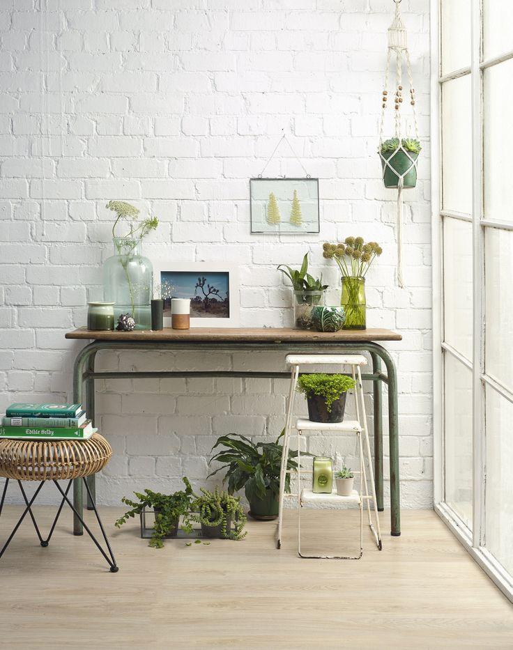 Indoor Plants - styled by Kendyl Middelbeek & Juliette Wanty. Photography by Melanie Jenkins. Your Home & Garden March 2014.