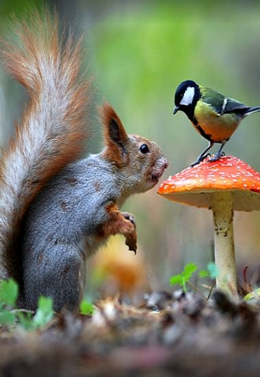 Sorry I touched a tit, it was unintentional !! , it only happened by accident as there isn't MUSHROOM in this part of the small garden ‼️✔️