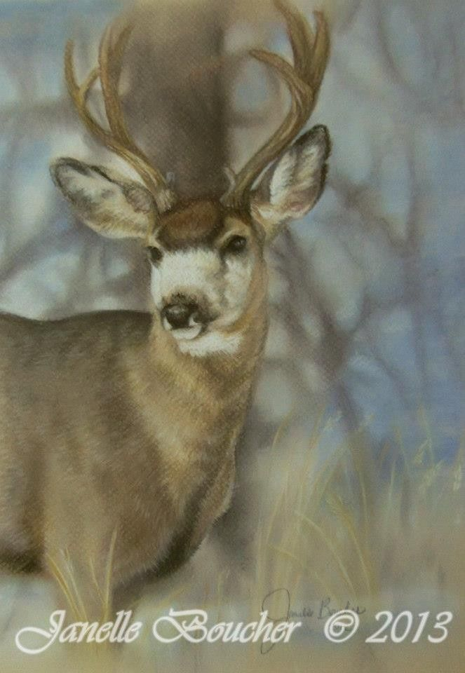 Mule Deer ~ Pastel , Thank you to Shawn Parker  for the reference photo !