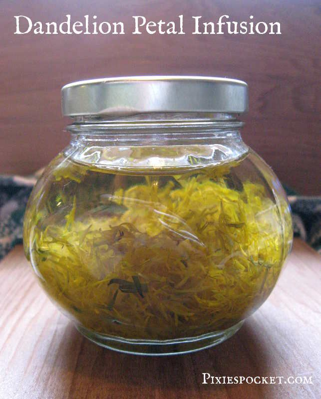 Dandelion flowers are nutritious and delicious! Make dandelion flower infusion and turn it into a syrup to preserve the goodness all year round.