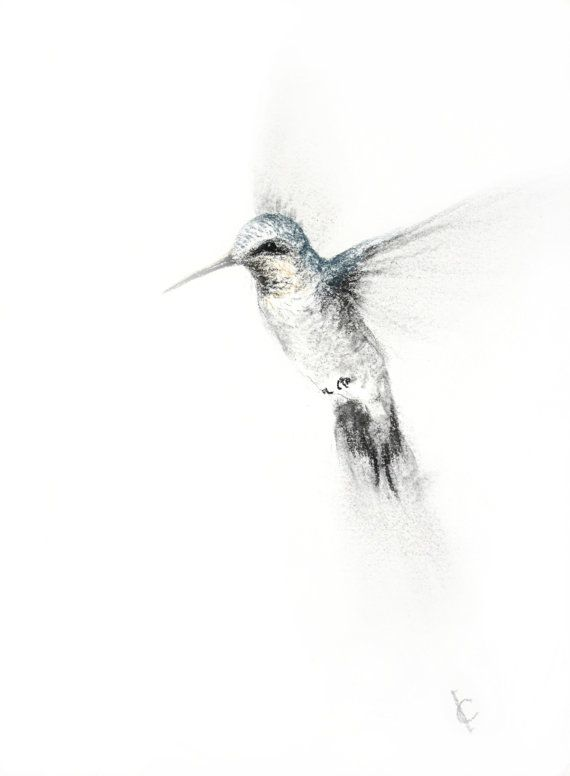 Hummingbird Drawings Step By Step: 17 Best Ideas About Hummingbird Drawing On Pinterest