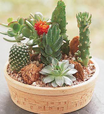 Succulent Dish Garden Ideas succulent garden ideas container succulent dish Succulent Dish Garden Ideas Home Plant Plant