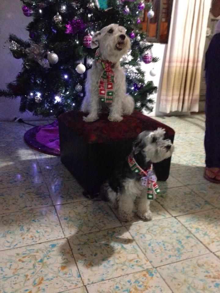 Clientes felices con LA GARDENIA. #LaGardenia #Moños #Mascotas