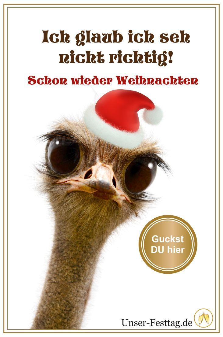 Lustige und originelle XXL Weihnachtskarten mit Deinem Wunschtext