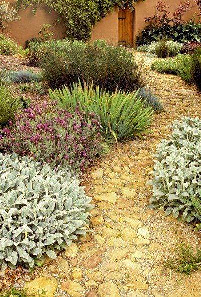 Green Mediterranean Garden Path: lambs ear might work. Nice gray color