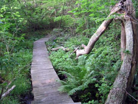 54 best montauk trails images on pinterest state parks for Pond reeds for sale
