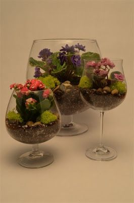 Mini Terrariums, Gardening Inside, Succulents, Wine Glasses, DIY