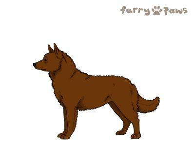 Furry Paws // WCH Kip's Retina [21HH 1.583] 2.4 *BoB*'s Kennel