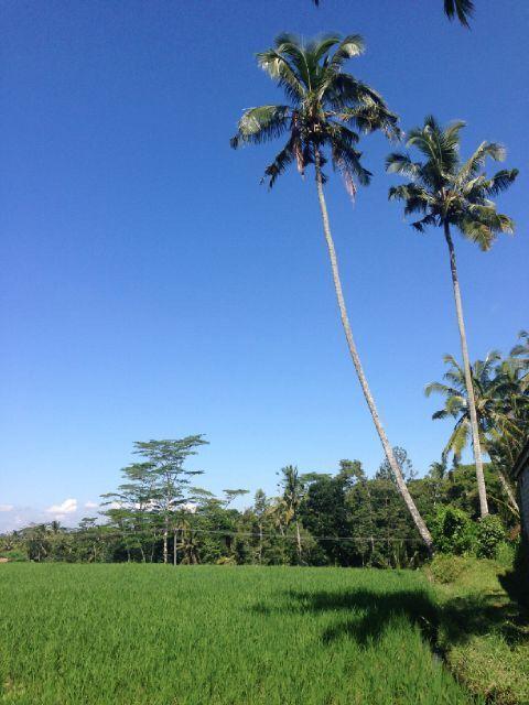 Rice Field Subak Malung Bunutan Ubud