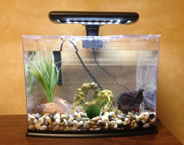 17 best ideas about fish aquarium decorations on pinterest for Betta fish decor