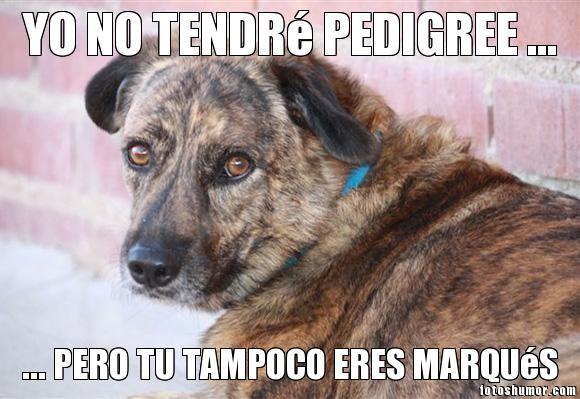 #adoptar #noabandono #perro #mascotas #protectoras #animales