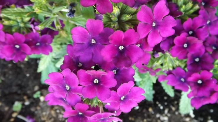 Μια λουλουδάτη καλησπέρα!
