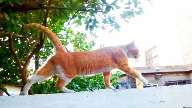 Un gato de arrabal...