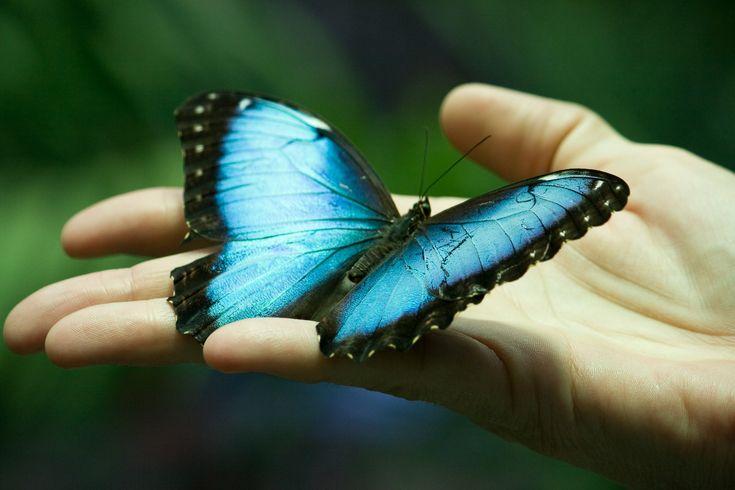 Ucenicul si fluturele
