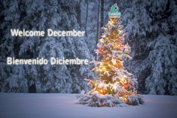 Декабрь, добро пожаловать! Волшебный месяц праздников и подарков!  http://rivieramaya.grandvelas.com/russian/