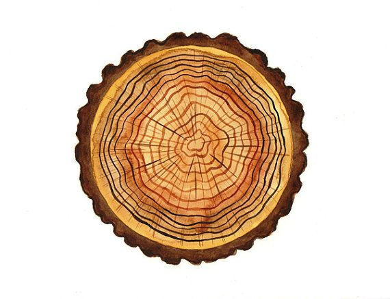 Original watercolor Tree rings spring wood grain nature log