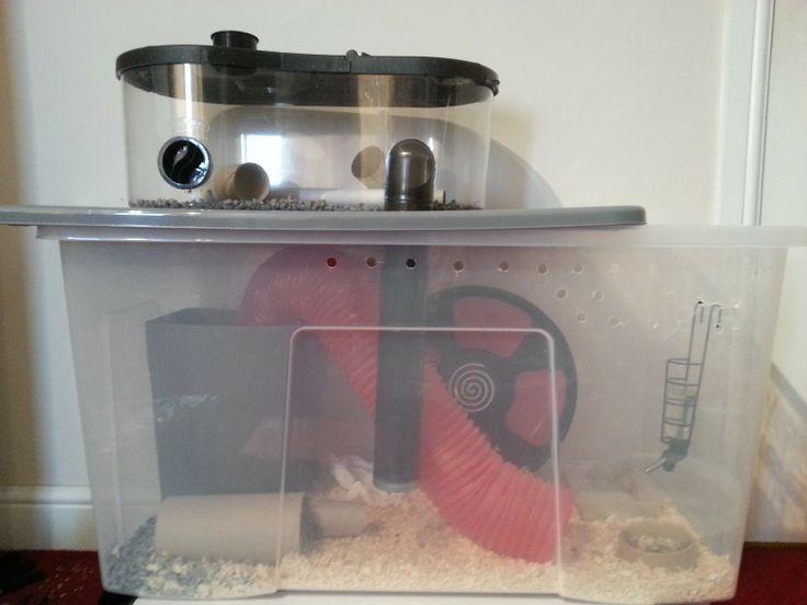 Best 25 hamster supplies ideas on pinterest hamster for Hamster bin cage tutorial